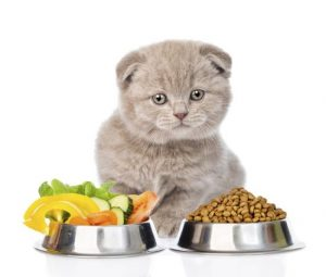 Natural Cat Food